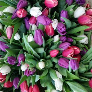 Тюльпаны оптом в Новосибирске